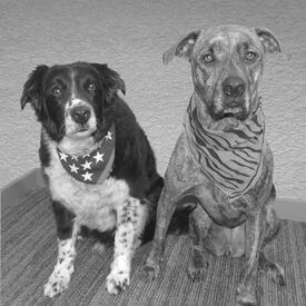 Buddy & Mavis